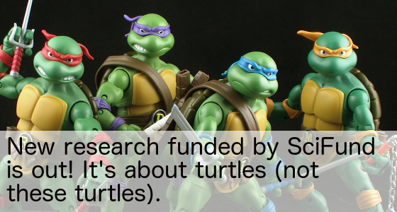New turtle research brought to you by SciFund crowdfunding!